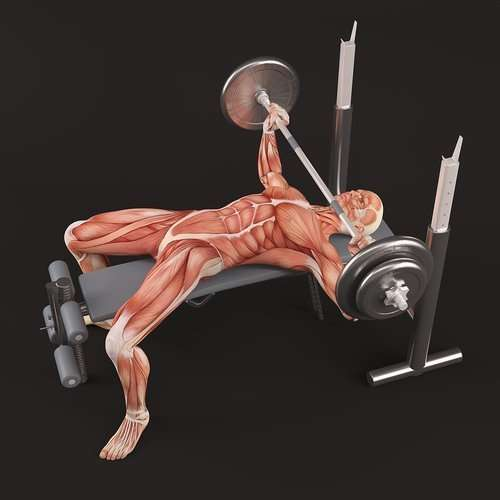 Chest Workouts For Building Chest Muscle Mass