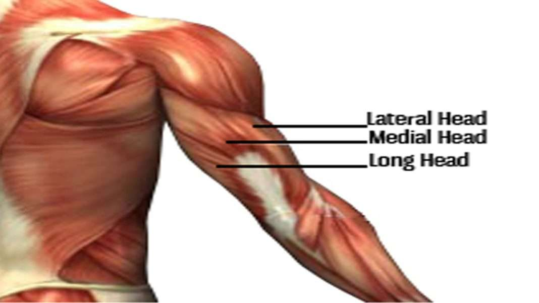 Recommended Best Exercise For Triceps