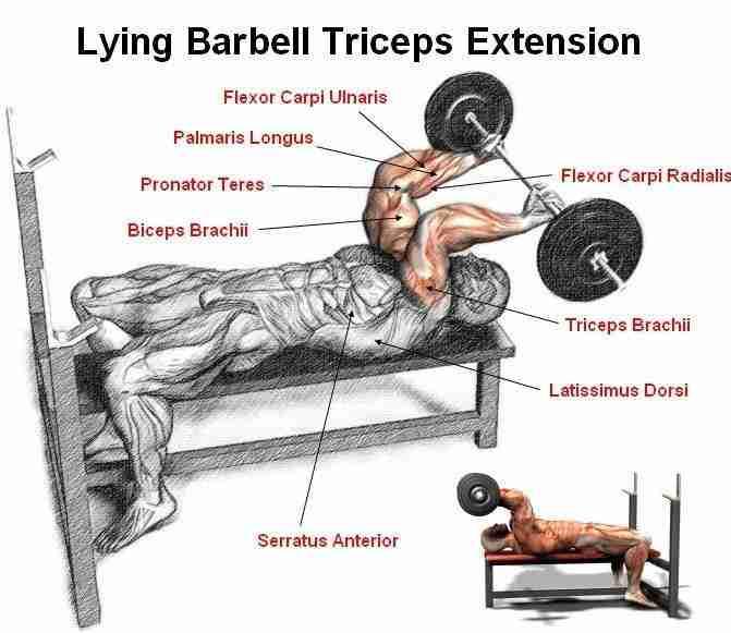Top Triceps Exercise 4 Lying Extension Skullcrusher