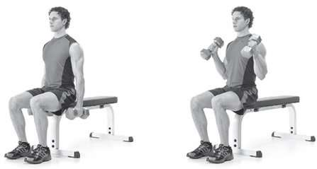 Seated Hammer Curls