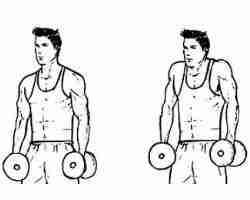 Dumbbell Shoulder Shrug