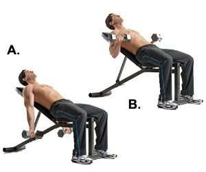 Inclined Dumbbell Curls