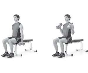 Standing Seated Hammer Curls