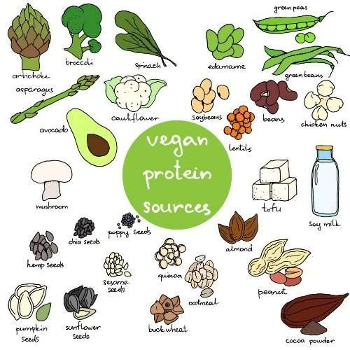 Plant Foods Protein Sources